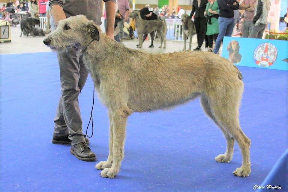 Paris dog show jan 19