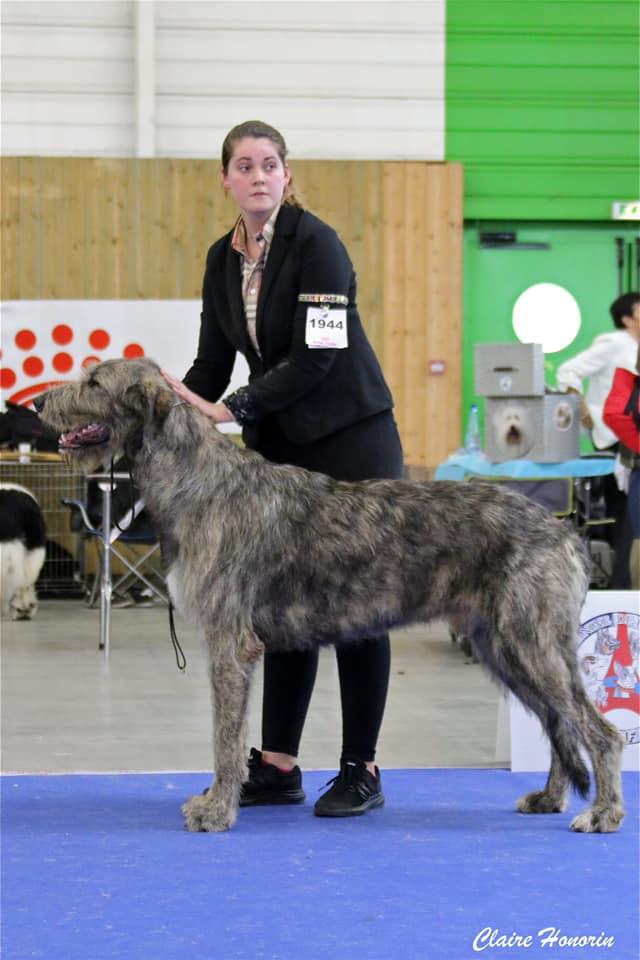 Paris dog show jan 20